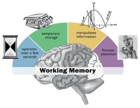 working memory diagram.