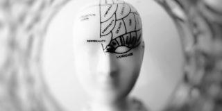 Your brain
