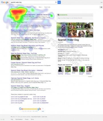 Google Spanish Water Dog