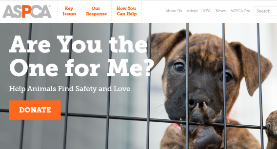 aspca homepage mere agreement