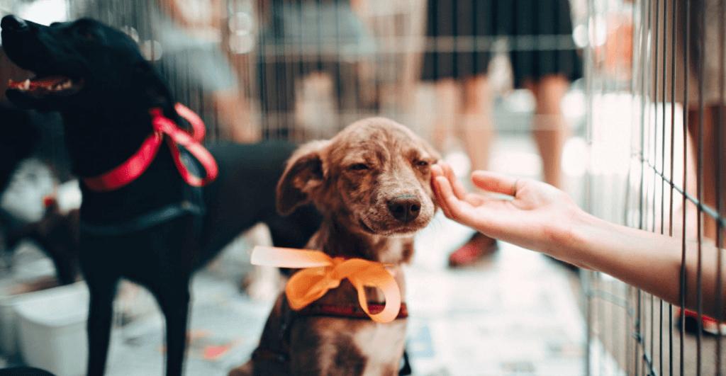 dog at animal shelter.