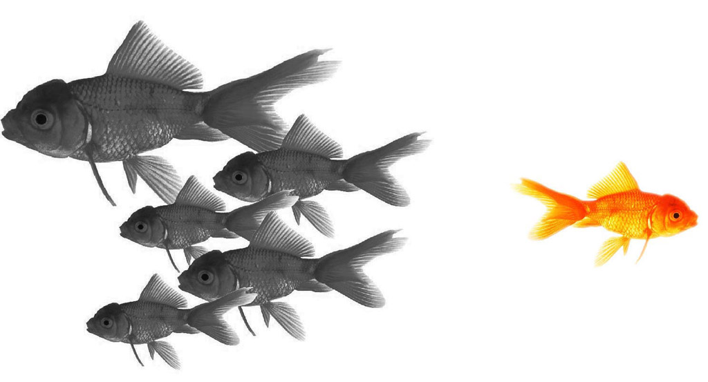 fish swimming in different directions.
